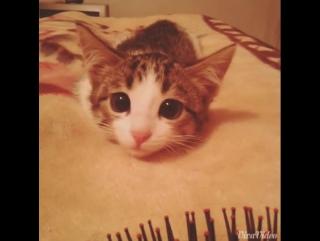 Няшный котенок : 3