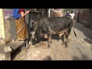 Vrindavan - 2012 [Parikrama from Kaliya Ghat to Radha Damodar Temple]