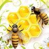 Бесконтактное колодное пчеловодство
