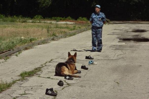 Служебная собака помогла задержать уличного грабителя