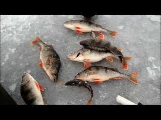 Зимняя рыбалка на Волге. Мастрюки.