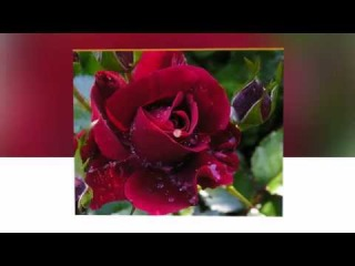 ����� �������� ������� - Chris Spheeris Laguna   ����  ������ HD
