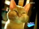 Немецкая реклама кошачьего туалета Уха ха ха всем смотреть угар ) DDD.360