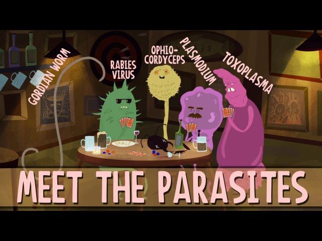 How parasites change their host's behavior Jaap de Roode