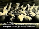 ХорватскиеУжасы Геноцид по указке Ватикана Как стравливают народ придумав нации