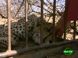 BBC Мир природы Гепарды