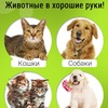 """Центр реабилитации бездомных животных """"ДОЗОР"""""""