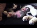 Rüyasında korkan yavru kedi