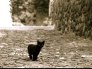 #3001. Коты (В мире животных)