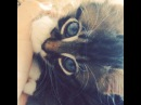 Котенок сосет лапку :3 мимими