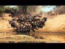 Национальный парк Серенгети Serengeti 2011