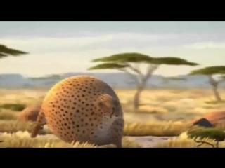 Смешное видео про полных и толстых животных - Прикольный и забавный ролик