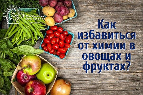 Реферат про фрукты для детей 9592