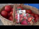 Урожайные сорта ТОМАТОВ в семенах и в реальности