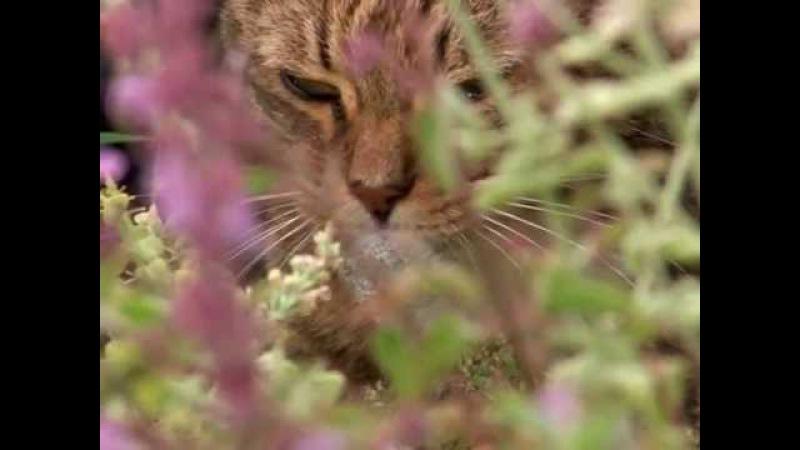 Эти загадочные животные / BBC: Weird Nature 6