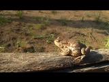 Какое же милое существо - жаба:)
