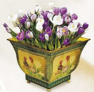 Луковичные комнатные цветы фото