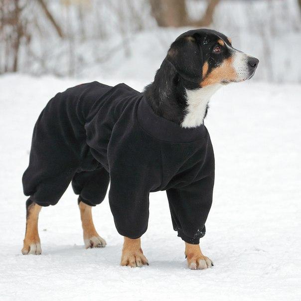 OSSO Fashion - лучшие товары для животных,дрессировки,спорта XlI6KY4ESVI