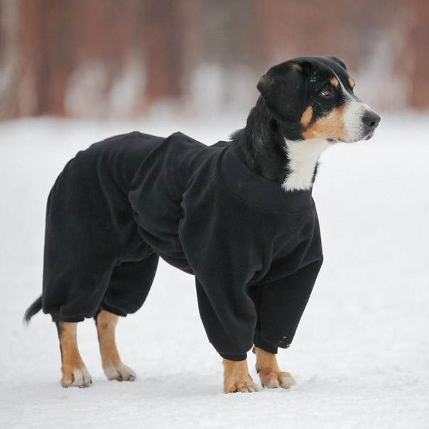 OSSO Fashion - лучшие товары для животных,дрессировки,спорта SkHCfTav5RE