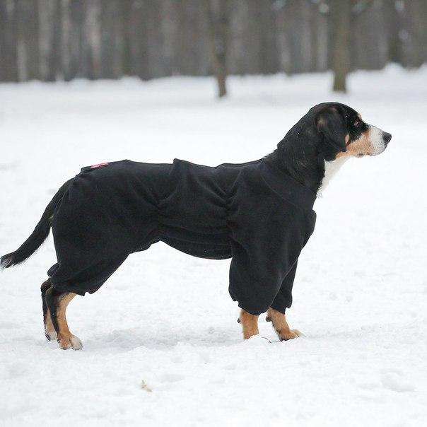 OSSO Fashion - лучшие товары для животных,дрессировки,спорта 0u0Mgd3h1r0
