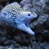 """Выставка рыб """" Подводный мир"""" в Улан-Удэ."""