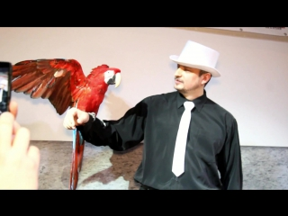 S Шоу- Дрессированные попугаи и фокусы с животными на детском празднике