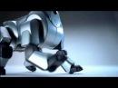 ROBO TOYS - NEW SONY AIBO ROBOTS FOR SALE!