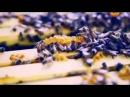 Мёд - пища богов. Древние секреты молодости и долголетия. Целебные свойства мёда