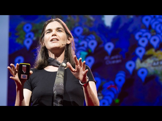 Ted Talks | Daphne Koller «What we're learning from online education»