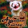 Питомник домашних хорьков Angeliсo Suerte