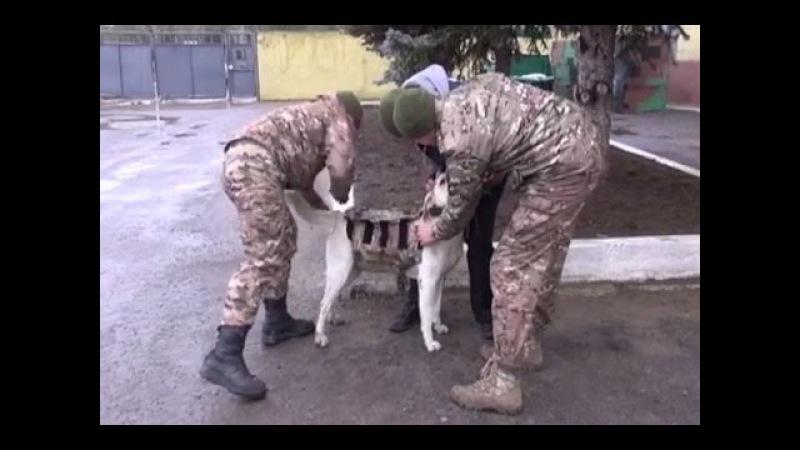 Собаки Луганского погранотряда будут ходить в бронежилетах