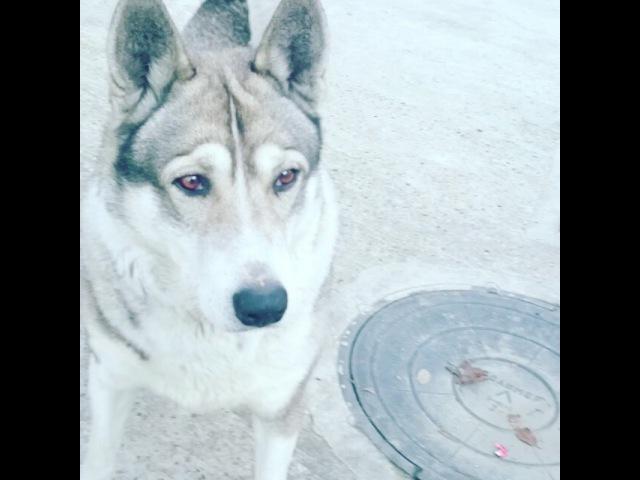"""Назели Варелджян✌ on Instagram: """"Это моя любимая собачка, 😘😘😘его зовут Чарли😘😘😘😘😘😘😘😘😘😘😘😘"""""""