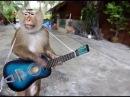 Funny Monkey Show Video Compilation Dance Talent Magic Etc