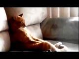 Мой кот- ИДИОТ!