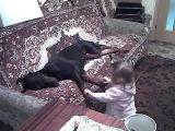 Дети и животные Доберман