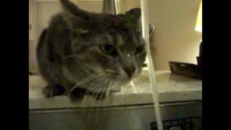 Cat is washing under tap - У кота сушняк