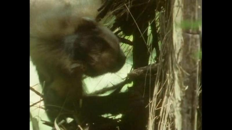 BBC Борьба за выживание 03. Поиски еды (Finding Foot)