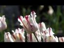 Весна и Besame Mucho - Nicolas De Angelis