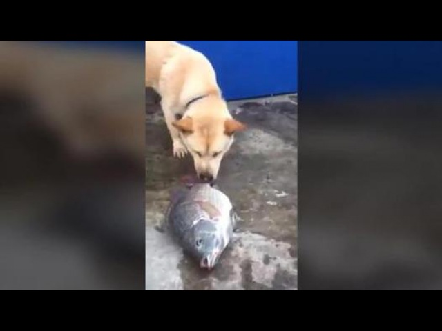 Un chien arrose des poissons qui meurent