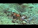 Жизнь морских обитателей. Странные и безумно красивые )
