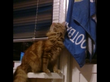 История о том, как мой кот открыл балкон