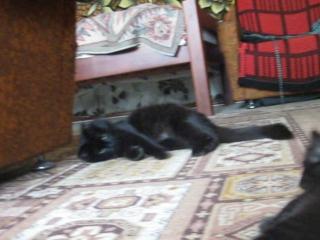 наше кошачье семейство:)