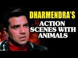 Дхармендра в сценах сражения с животными (из фильма Король джунглей 1976)