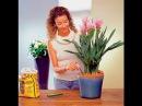 ТОП-10 ЛУЧШИХ комнатных растений для ЛЕНТЯЙКИ