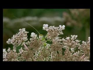 Микрокосмос Microcosmos: Le peuple de l'herbe [HD] (française)