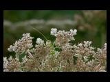 Microcosmos Le peuple de l'herbe HD