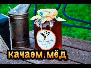 Пчёлы #6. Отбор рамок и откачка мёда на пасеке