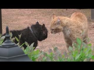 Драка котов, с озвучкой из фильма