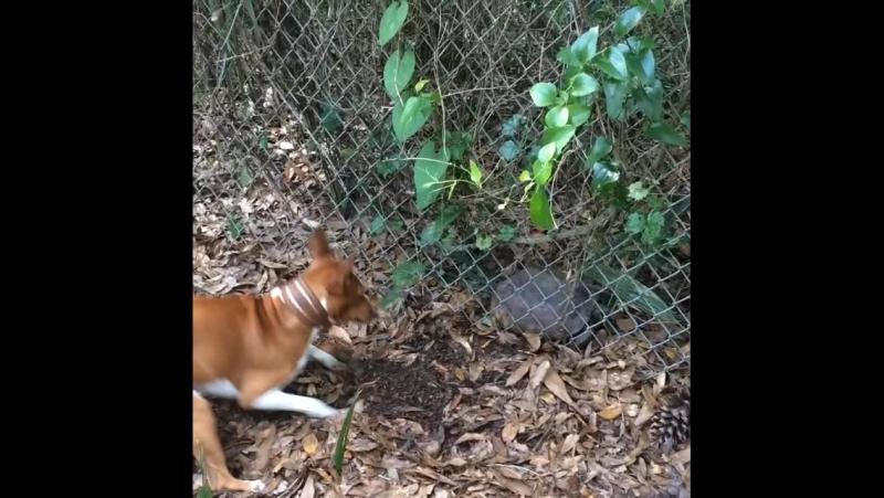 Первое знакомство с Черепахой что это Даже никак не кусается и видит око да зуб неймёт