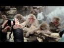 Snow monkeys soak in hot springs of Japan